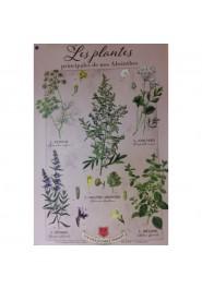Affiche Tissus les Plantes